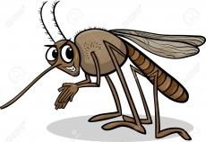 [Zika] Mosquito