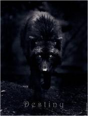 wolfphantom