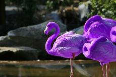 The Rebel Flamingo