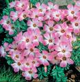flowerkingliam