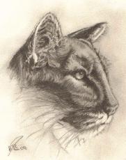 cougarose