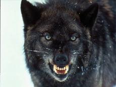 WolfTracker