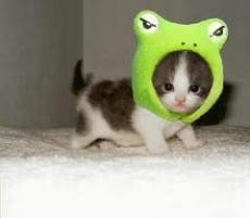 Evilcat203