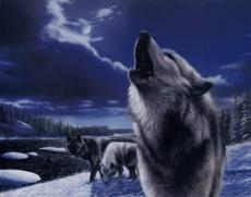 WerewolfForever
