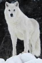 VampwolfWarrior