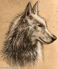 lone wolfey