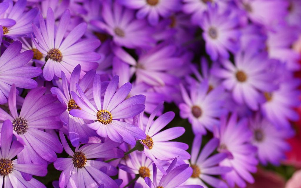 flower-wallpapers-flowers-purple-wallpap