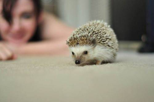 cute-hedgehog-15.jpg