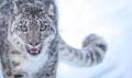 Animal Fiction/Fantasy