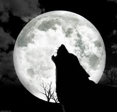 Werewolf Street