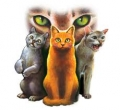 Warrior Cats Fanfics!