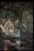 Warrior Cats Fan-Fictions